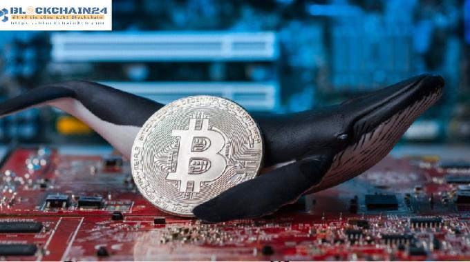 Làm thế nào để phát hiện cá mập – kỹ năng cần thiết cho ngư dân Crypto